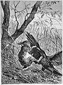 Die Gartenlaube (1883) b 469.jpg