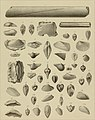 Die Versteinerungen des rheinischen Schichtensystems in Nassau. Mit einer kurzgefassten Geognosie dieses Gebietes und mit steter Berücksichtigung analoger Schichten anderer Lander (1850) (14783847102).jpg
