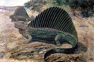 Paleozoic - Synapsid: Dimetrodon