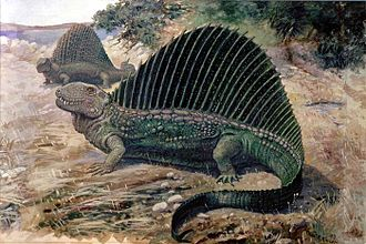 Phanerozoic - Dimetrodon
