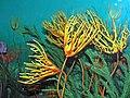 Diorama of a Carboniferous seafloor - crinoids & algae (30665241817).jpg