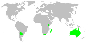 Gallieniellidae spider family