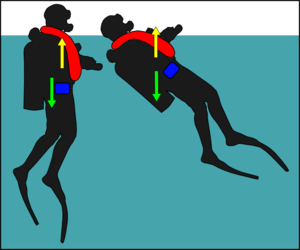 Diver trim - Diver with centre of buoyancy a long way to the front will rotate backwards by a large angle