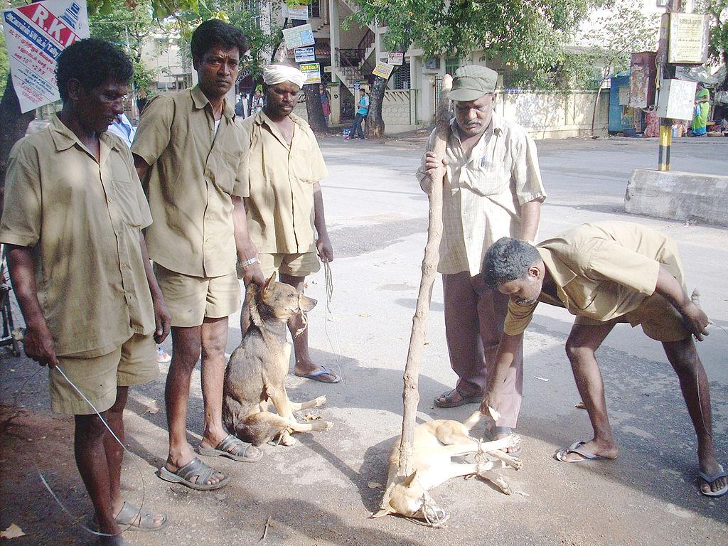 Dog(street)catchingTAMILNADU36India.jpg