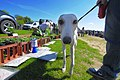 Dog no to sel - panoramio.jpg