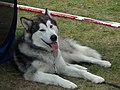 Dog show in Druskininkai.jpg