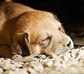 Dogs (5081439512).jpg