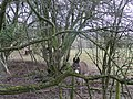 Donkeys by the Bream Road - geograph.org.uk - 1700468.jpg