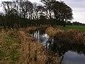 Drainage channel east of Scorton Lake - geograph.org.uk - 1773165.jpg