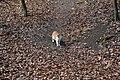 Dresden-Wachwitzgrund-Katze im März 2018-02.jpg