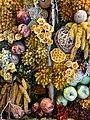 Dried-Flower Display - Farm Tomita - Nakafurano - Hokkaido - Japan - 03 (48006043333).jpg