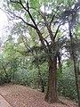 Drvece u parku (9).jpg