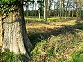 East Croft Coppice - geograph.org.uk - 1266776.jpg