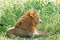 Eastern Serengeti 2012 06 01 3492 (7522709602).jpg