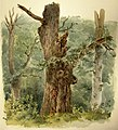 Eduard Leonhardi - Waldlandschaft mit absterbendem Baum.jpg