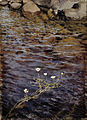 Eero Järnefelt - Pond Water Crowfoot - Google Art Project.jpg