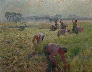 Flax harvesting