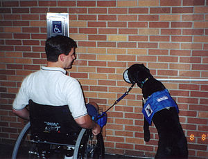 Service animal - This service dog has been trained to press a button to open an electric door for his wheelchair-using owner.