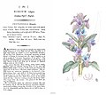 English Botany James Sowerby Vipers Bugloss.jpg