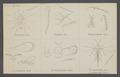 Entedon - Print - Iconographia Zoologica - Special Collections University of Amsterdam - UBAINV0274 046 11 0020.tif