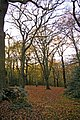 Epping Forest near Pole Hill, London E4 - geograph.org.uk - 1053993.jpg