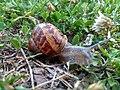 Escargot de Strasbourg - 1.jpg