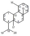 Esferano - Numeración.png