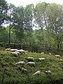 FR-15-Landscape4.JPG