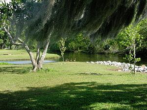Fairview-Riverside State Park - Black-Bellied Whistling Ducks at Fairview-Riverside State Park