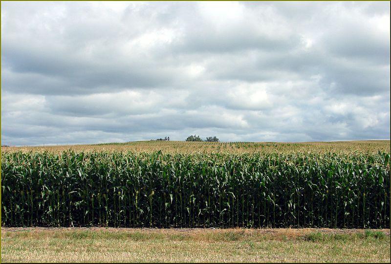 File:Farms and Crops, IA 7-26-13n (11033732214).jpg
