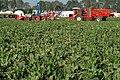 Fendt 818 Vario with dewulf Beeta6, dewulf R7050 at Werktuigendagen 2005 b.jpg