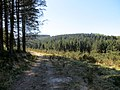 Fernworthy Forest on a hot April afternoon - 2015 - panoramio.jpg