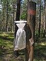 Feromon trap lymantria monacha 2 beentree.jpg