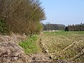 Field boundary - geograph.org.uk - 384700.jpg