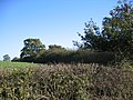 Field boundary hedges - geograph.org.uk - 274464.jpg