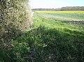 Field near Great Wood - geograph.org.uk - 979161.jpg