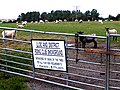 Field used by Lloc and District Riding Club, and sheep - geograph.org.uk - 32195.jpg