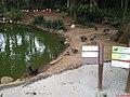 Flamingos e Marrecos - Zoológico de São Paulo - panoramio.jpg