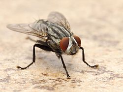Flesh Fly Los Angeles 2015-08-06 3.jpg