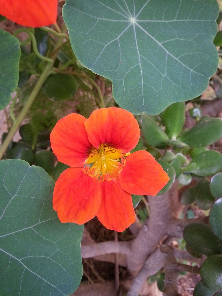 File:Fleurs de Jardin (7).jpg - Wikimedia Commons