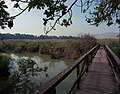 Flickr - Government Press Office (GPO) - Hula Valley Nature Reserve (cropped).jpg