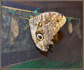 Flickr - ronsaunders47 - CHECKING UP ON THE KIDS.jpg