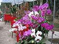 Flowermarket10.jpg