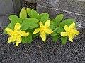 Flowers along the roadside (3) - geograph.org.uk - 1394735.jpg