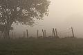 Fog IMG 3397.jpg