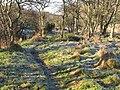 Footpath near the River East Allen - geograph.org.uk - 636048.jpg