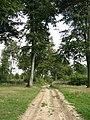 Forêt de Tournehem - panoramio - Jean Marc Gfp (1).jpg