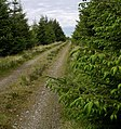 Forest Track to Crugyn Amlwg. - geograph.org.uk - 1317181.jpg