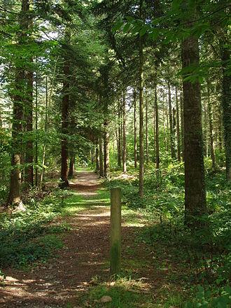 Montfort-sur-Meu - Forest of Montfort-sur-Meu