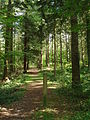 Forest of Montfort-sur-Meu.JPG